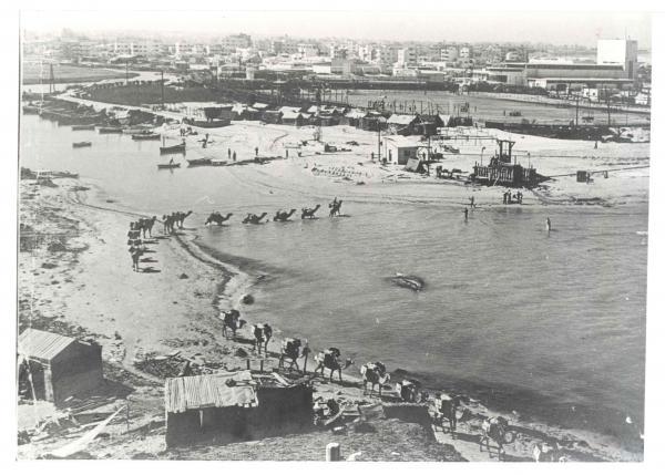שיירת גמלים חוצה את נהר הירקון ליד שפכו, 1934 קרדיט: ארכיון חברת החשמל