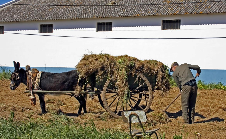 עבודה והתנדבות בפורטוגל
