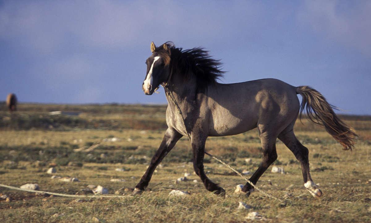 סוסים בפורטוגל